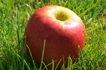 An apple in the grass Stock Photo