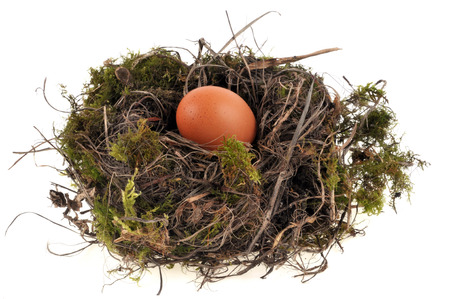 The egg in the nest