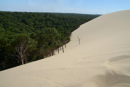 Dune of Pilat and forest of Landes