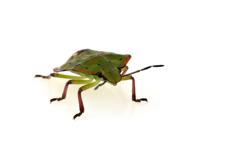 Green bugs on a white background Stock Photo