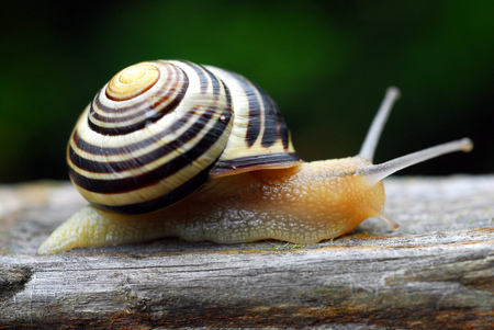 The snail Stock Photo