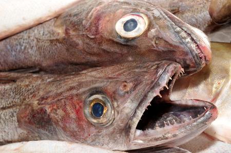 Seehecht am Stand eines Fischhändlers