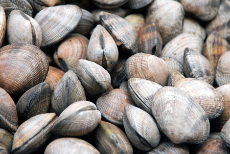Heaped clams