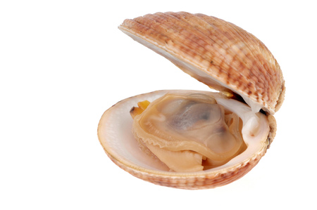 Clam open on white background