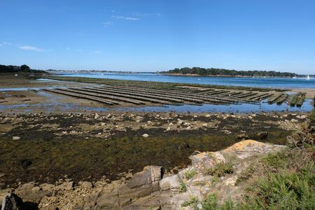 Oyster park in the Gulf of Morbihan Stockfoto