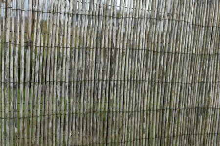 Garden fence made of natural reeds close up