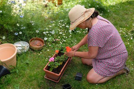 Woman potting geranium plants Banco de Imagens