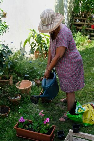 Woman watering geranium plants