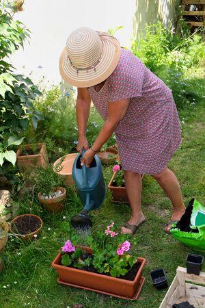 Woman watering geranium plants Banco de Imagens
