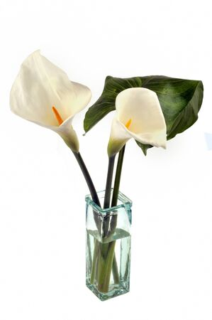 Arums in a vase on a white background Banco de Imagens