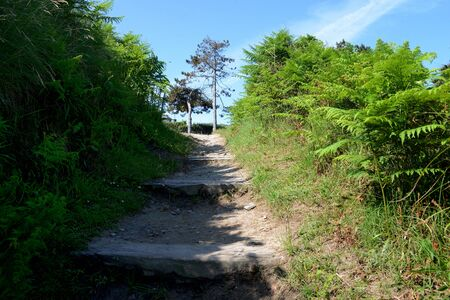 Hiking path in Brittany bordered by ferns