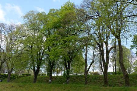 Trees in the garden of La Garenne in Vannes in Brittany Imagens