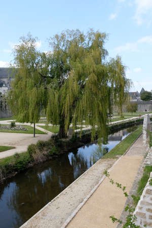 Weeping willow in the ramparts gardens at Vannes in Brittany Imagens