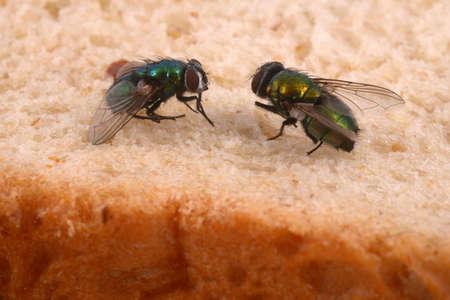 Close-up of flies on sandwich bread