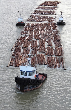 Three Tugs pull a log boom down the Fraser River in Vancouver, British Columbia