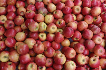 Okanagan Apples
