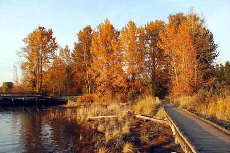 Autumn Colors Stock Photo - 11193468