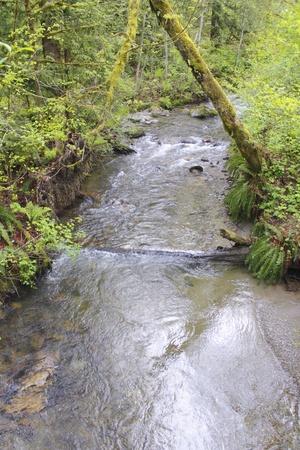 spawning: Salmon Stream Stock Photo