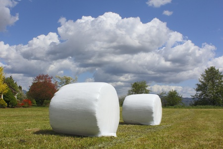 Wrapped Hay Bails photo