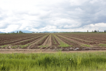 A Potato Field in Washington State photo