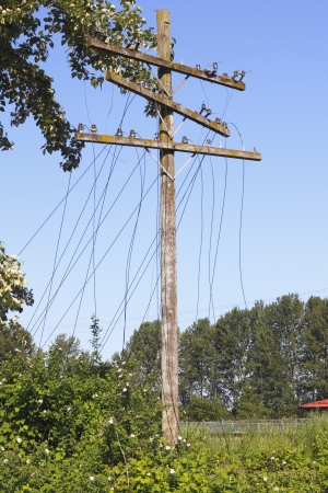 Downed and damaged hydro electric and telephone lines
