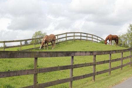 grassy knoll: Horses graze on a grassy Knoll