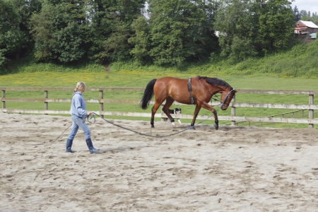Trainer and her Mare Banque d'images