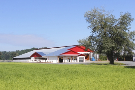 cows red barn: A modern dairy farm building used to feed and milk cows Stock Photo