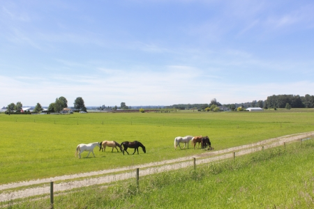 Horses graze in a pasture photo
