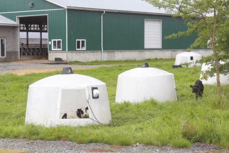 hutch: Calf Hutch used for protecting young calves