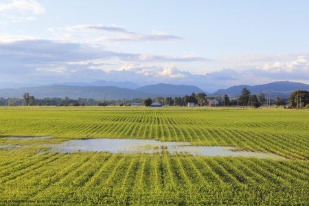 A rural field after a heavy downpour is saturated Stock Photo
