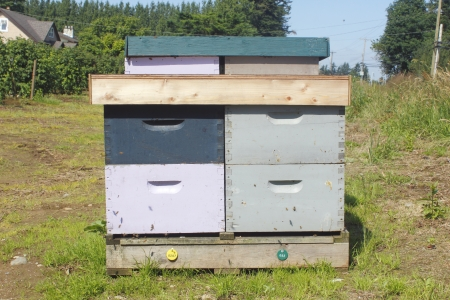 blueberry bushes: A man made beehive box near blueberry bushes
