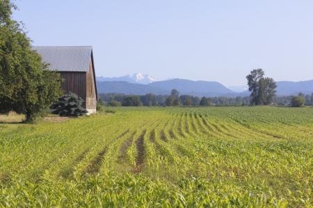 A Canadian homestead
