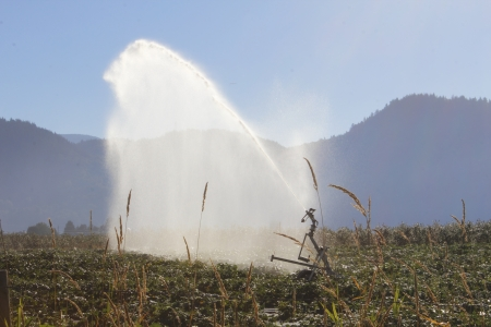 thorough: A long, thorough spray of water across a field