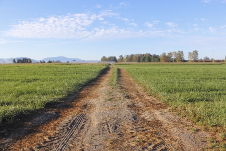 A dirt, rural road across a prairie acreage Stock Photo