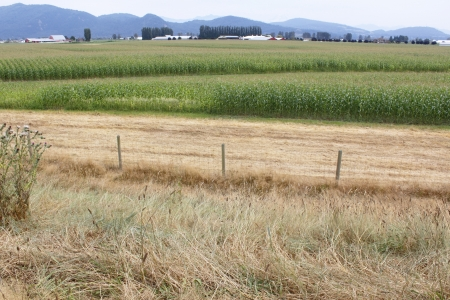 An August landscape unveils acres of land that will soon be harvested