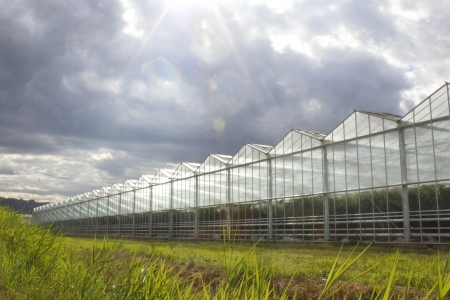 Sunlight generates growth in a greenhouse Banco de Imagens