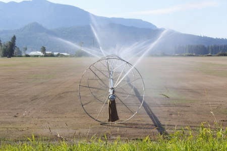 irrigated: A farm in northwest Washington State is freshly planted and irrigated