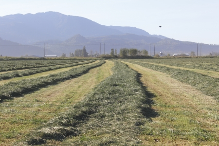 A field has been freshly hayed and is drying