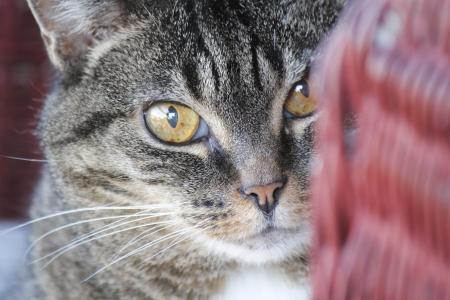 Close-up van een oudere, volwassen poes Stockfoto