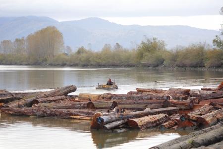 boomer: A Boomer sorts cedar logs for cutting Stock Photo