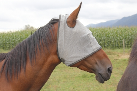 blinders: A horse wears a bug mask or blinders to protect her eyes