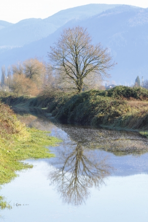reflects: tree reflects onto calm water