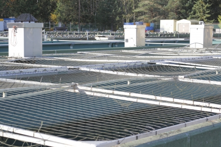 hatchery: Salmon holding tanks are netted to prevent wildlife from getting at the frys