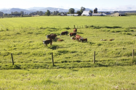 A wide open acreage prime for cattle grazing photo