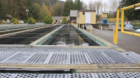 chum: Tanks in a fish hatchery where Coho and Chum salmon are raised  Stock Photo