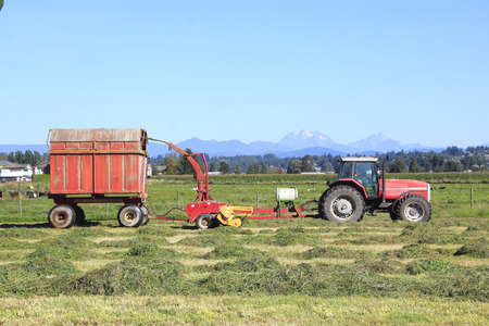 forage: A farmer uses a forage harvester to collect hay. Stock Photo