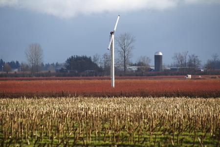 resourceful: A wind turbine is used to generate electricity on a berry farm in Washington State.