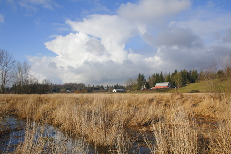 agricultural area: Winter marsh land surrounds a rural agricultural area.