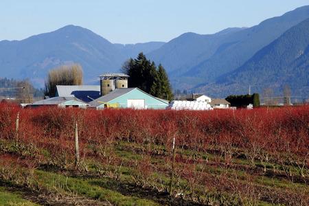 multipurpose: A multipurpose farm where livestock and crops are raised.